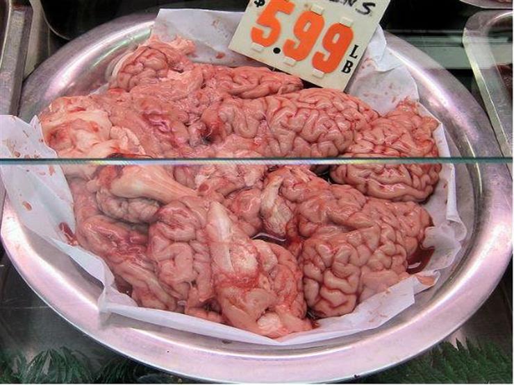 مخ قرود (2)