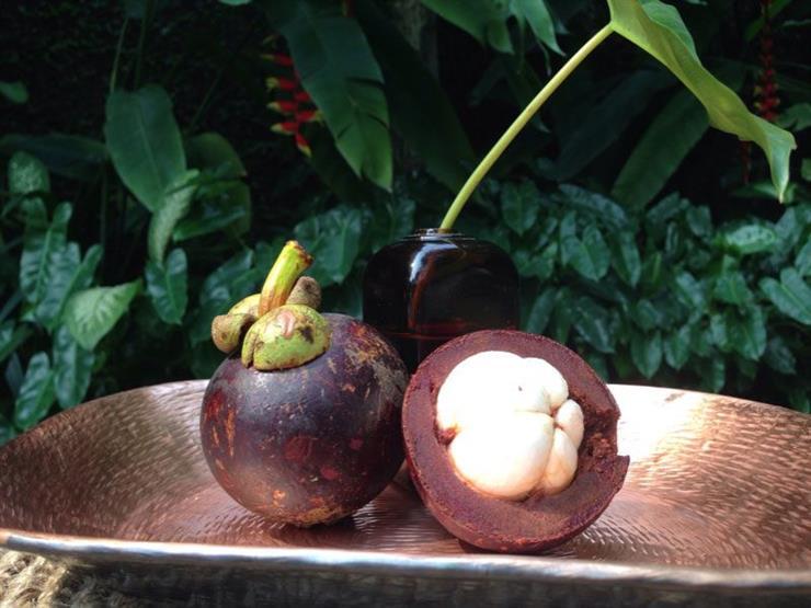 فاكهة المانجوستين