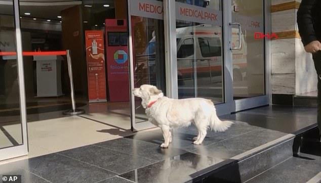 كلب مخلص تعقب سيارة إسعاف تقل صاحبه إلى مستشفى تركي وانتظر في الخارج لمدة ستة أيام حتى اجتمع شملهم