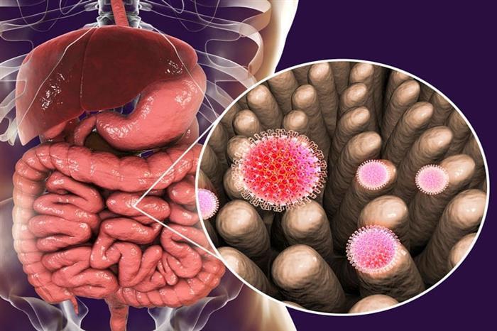 فيروس الروتا.. أبرز المعلومات عن الفيروسة العجلية (فيديوجرافيك)