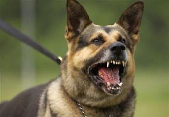 دراسة: الكلاب تكتشف 90% من حالات كورونا بدون أعراض