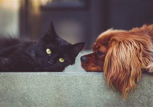 بعد الكلاب والقطط.. إصابة حيوان جديد بفيروس كورونا