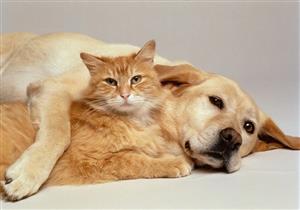 دراسة تكتشف نوعًا جديدًا من كورونا لدى القطط والكلاب