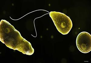 يسبب الوفاة.. ما هو ميكروب الأميبا النيجلرية الذي ظهر في أمريكا؟