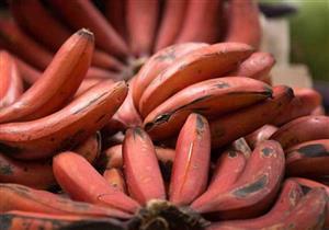 6 فوائد مذهلة للموز الأحمر.. تعرف عليها