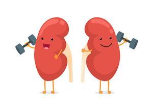 اتبعها يوميًا.. 5 عادات صحية تحمي الكلى من الأمراض