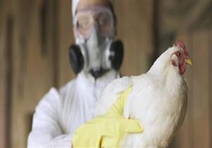 بعد ظهور إصابات في روسيا.. الصحة العالمية تعلن تفشي إنفلونزا الطيور بين البشر