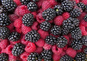 خبيرة تغذية تكشف أضرار الإفراط في التوت