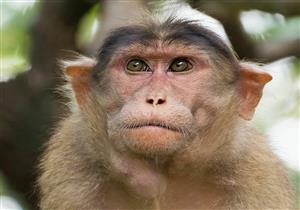 تسجيل أول وفاة بشرية بالفيروس القردي حول العالم في الصين