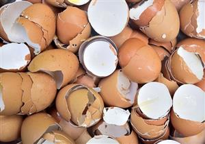 فوائد قشر البيض.. حقيقة أم خرافة؟