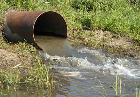 بحث مصري يعالج تلوث المياه بـ ''قشر الجمبري''