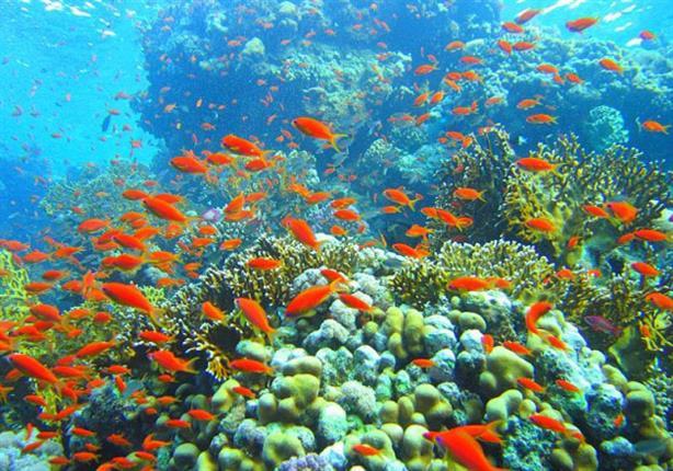 مدير محميات البحر الأحمر: نحافظ على الثروات الطبيعية للأجيال المقبلة