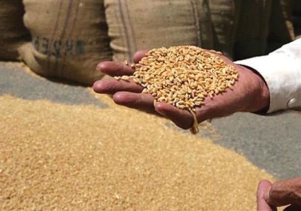 """بعد """"الانفجار النووي"""".. مسؤول يكشف إجراءات فحص القمح الروسي بمصر"""