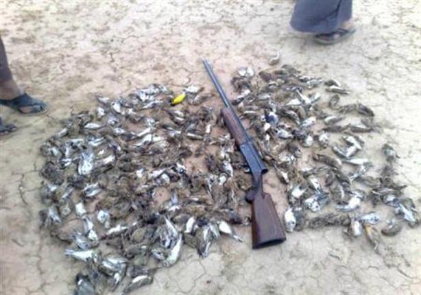 """""""البيئة"""" توضح بنود """"إعلان القاهرة"""" الخاص بمكافحة صيد الطيور المهاجرة"""