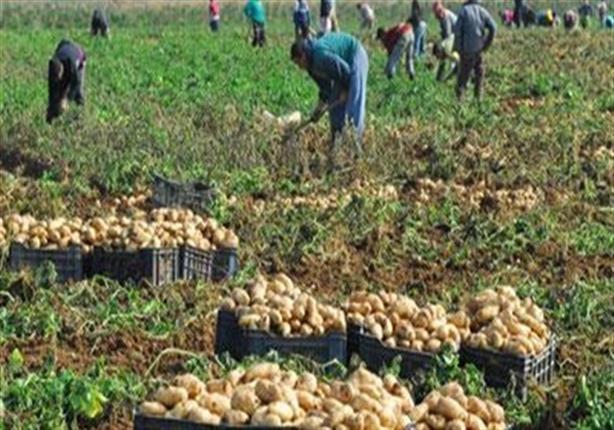 """""""البطاطس بالمركز الثاني"""".. تقرير يكشف حجم صادرات مصر الزراعية للخارج في 2018"""