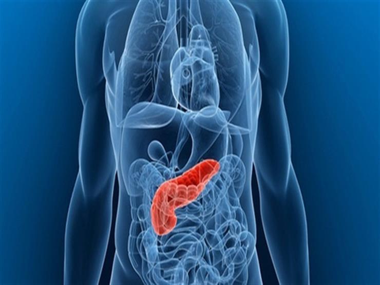 4 أطعمة صديقة للبنكرياس.. قد تساعد في السيطرة على السكري