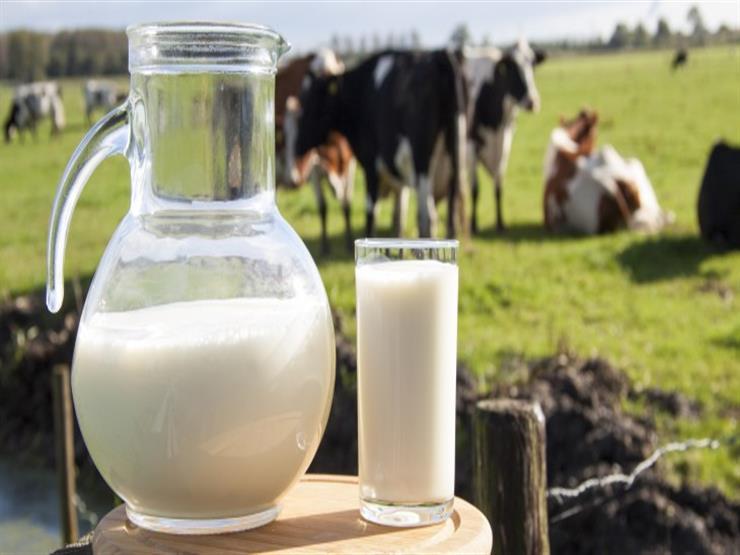 ما الفرق بين حليب الإبل والماعز والبقر؟