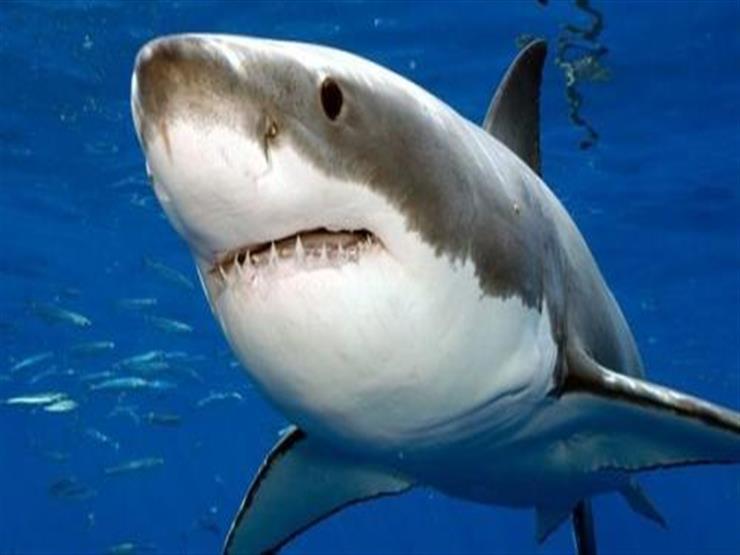 """""""المواد البلاستيكية"""" تهدد أسماك القرش"""
