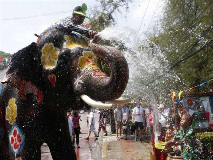 """الفيلة تستقبل العام البوذي الجديد في تايلاند بـ""""مهرجان الماء"""""""