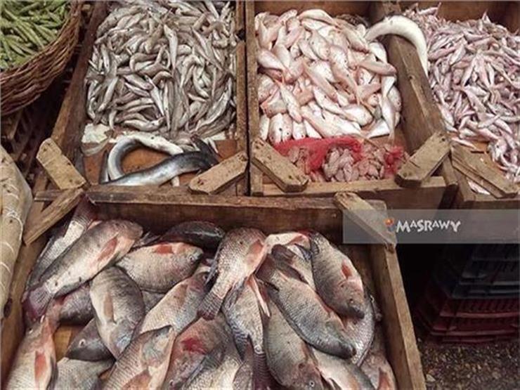 تراجع البلطي وارتفاع المكرونة والسبيط.. أسعار الأسماك في سوق العبور