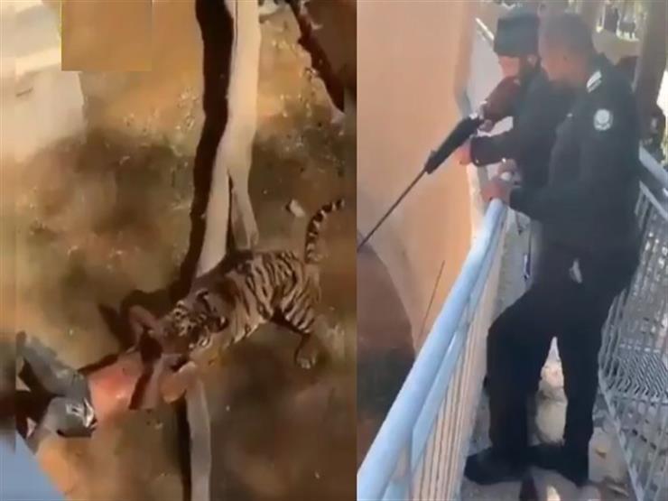 السعودية تكشف ملابسات هجوم نمر على زائر سوداني