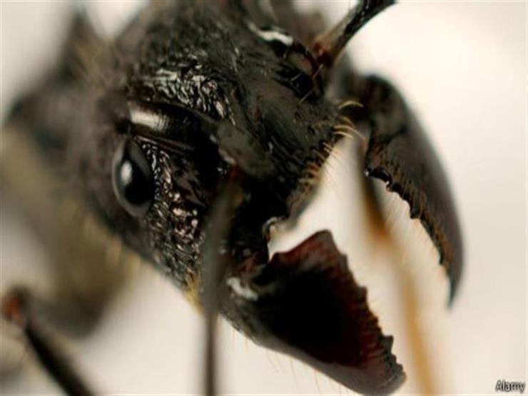 صرخة علمية.. الأرض بدأت موجة الانقراض السادسة بسبب الحشرات