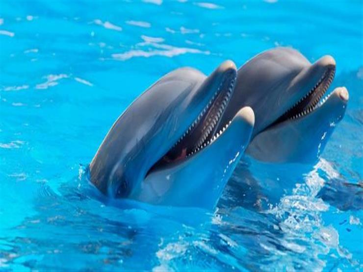 منها الدلافين.. 3 حيوانات ساحرة الجمال مهددة بالانقراض