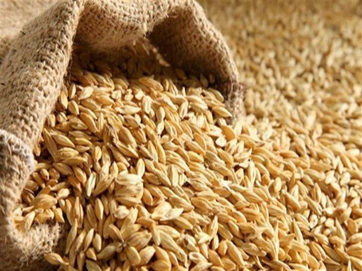 أسعار أرز الشعير تتراجع بقيمة تصل إلى 300 جنيه في الطن خلال أسبوعين