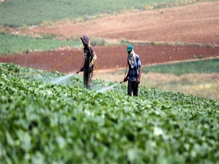 الزراعة: الذباب لا يؤثر على المحاصيل الزراعية