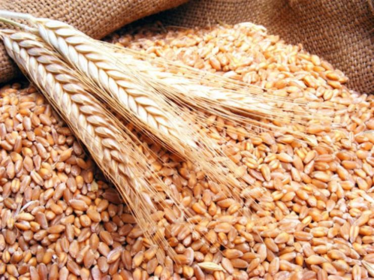 الإحصاء: زيادة إنتاج القمح والأرز رفعت إنتاج الحبوب في مصر العام الماضي