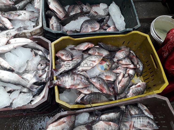 أسعار الأسماك ترتفع في سوق العبور خلال أسبوع