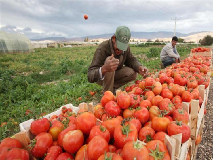 تقرير أممي يدعو إلى إعادة توزيع المساعدات الزراعية في العالم