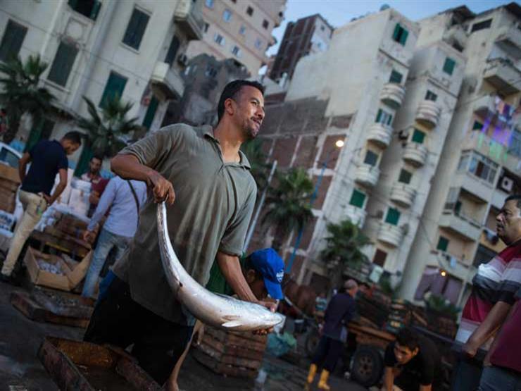 انخفاض البلطي والمكرونة.. أسعار الأسماك في سوق العبور اليوم الخميس
