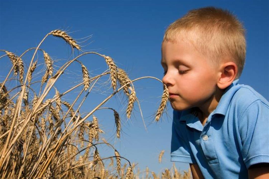 8 أعراض مزعجة لحساسية القمح.. إليك طرق العلاج