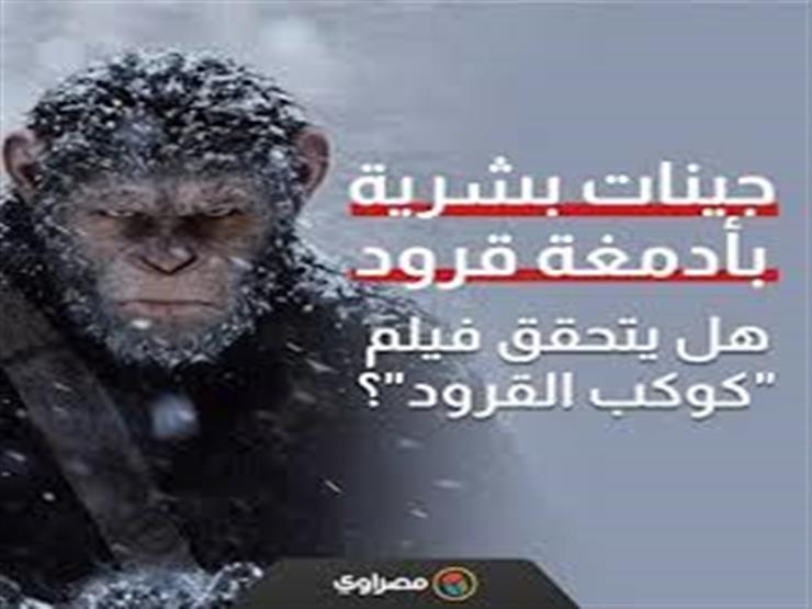 """جينات بشرية بأدمغة قرود.. هل يتحقق فيلم """"كوكب القرود""""؟"""