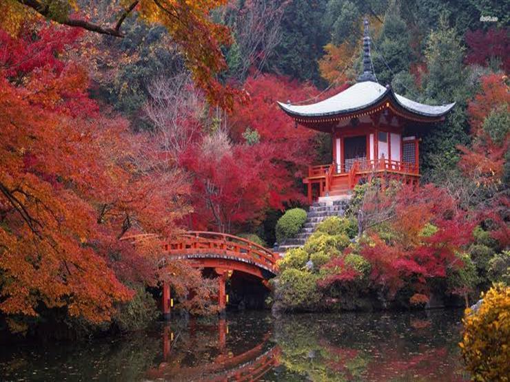 كيوتو لا تتمحور حول الأضرحة والمعابد.. هناك الشاي الأخضر والمناطق الساحلية