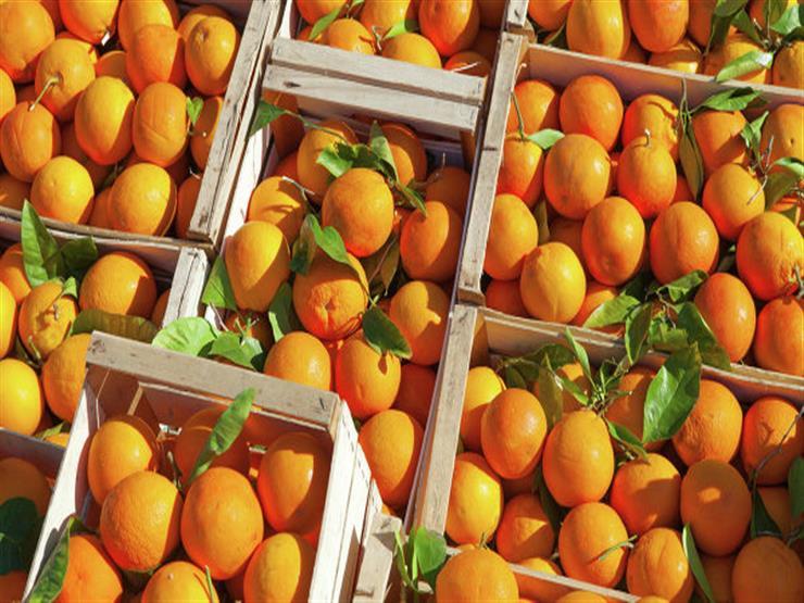 """مفتش بـ""""الحجر الزراعي"""": تصدير الموالح لليابان نجاح كبير لـ""""الصحة النباتية"""""""