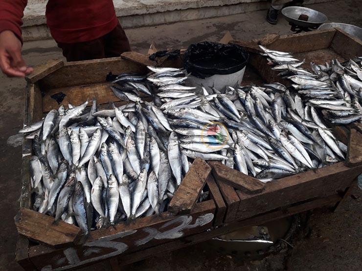 130 جنيهًا للقاروص.. ارتفاع نسبي في أسعار الأسماك بدمياط