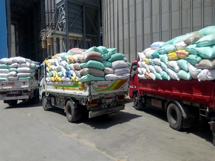 توريد 131 ألف طن قمح إلى صوامع التموين في الإسكندرية