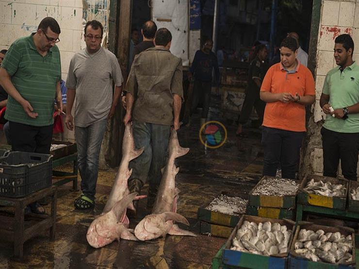 أسعار الأسماك والمأكولات البحرية في سوق العبور اليوم الأربعاء