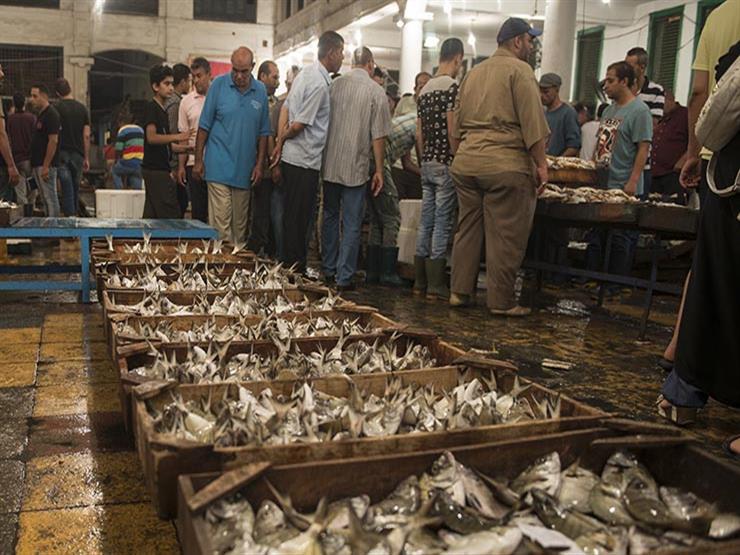 ٦٠ جنيهًا للبوري.. تراجع نسبي في أسعار الأسماك بدمياط