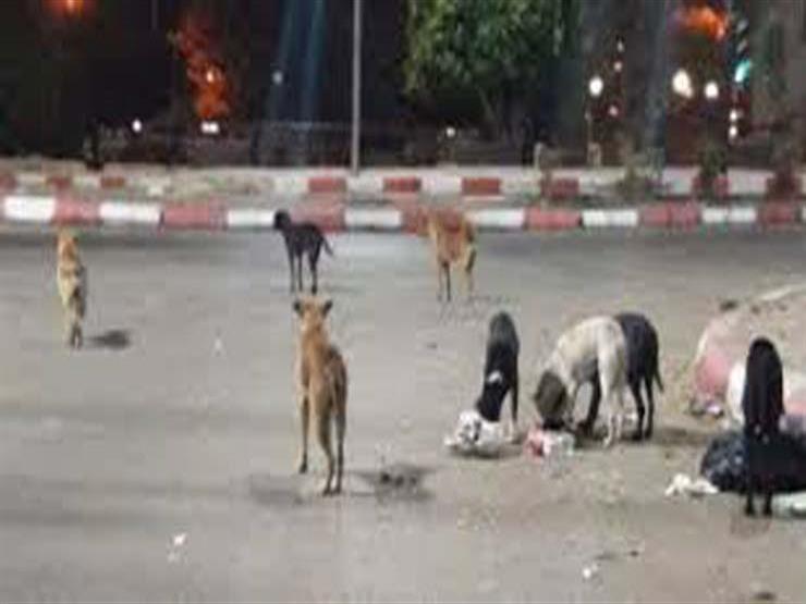 """تأجيل دعوى """"الرفق بالحيوان"""" لوقف قتل قطط وكلاب الشوارع إلى 23 يناير"""