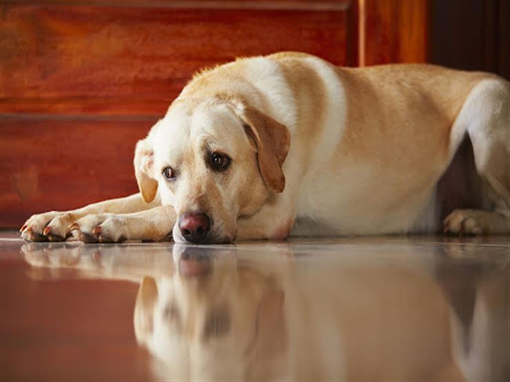 كيف تعد الكلب للمكوث بمفرده في المنزل دون مشاكل؟