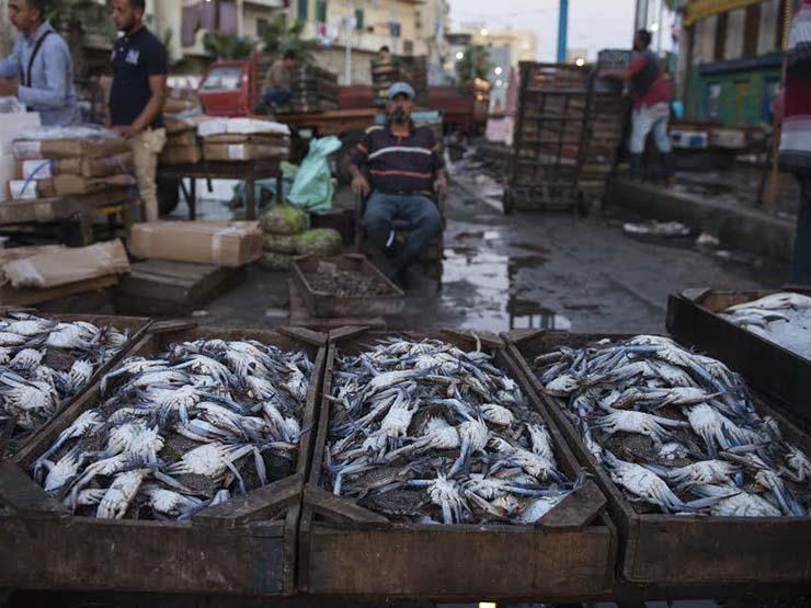 اتحاد الغرف التجارية: هبوط أسعار الأسماك والدواجن في فبراير وصعود اللحوم