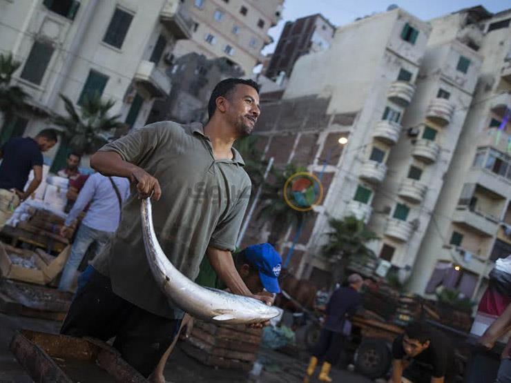تراجع البلطي والمكرونة.. أسعار الأسماك في سوق العبور اليوم الاثنين