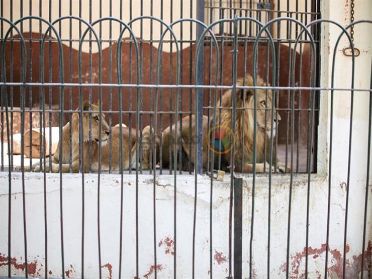 فيديو- لأول مرة حديقة الحيوان بدون جمهور في عيد الأضحى