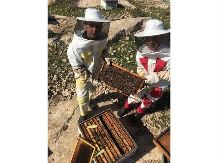 سوا في المنحل.. رحلة فلسطيني وصغاره مع إنتاج العسل