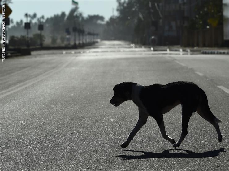 تسجيل أول إصابة لكلب بفيروس كورونا في الأردن