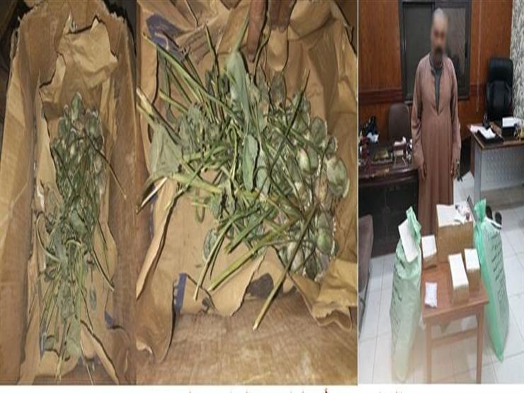 القبض على تاجر مخدرات بحوزته 310 أشجار خشخاش وأفيون بسوهاج