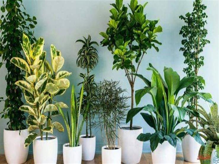 ما هي النباتات الممكن زراعتها بدون الكثير من أشعة الشمس؟